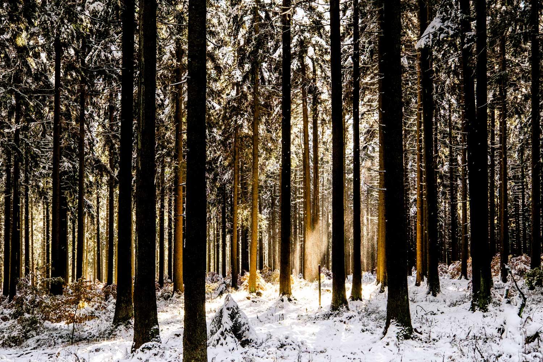 Wald-Schnee2
